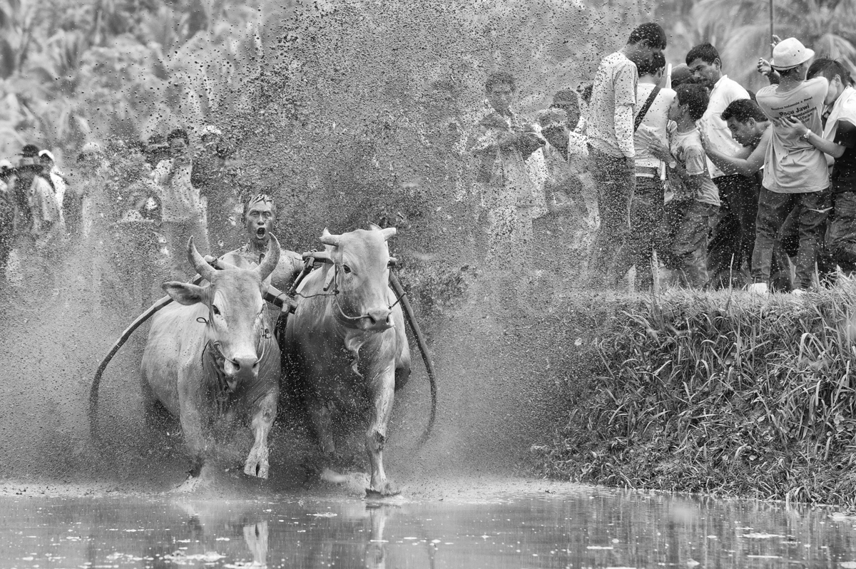 Pacu-Jawi-Bull-Racing-2012_0397-Edit