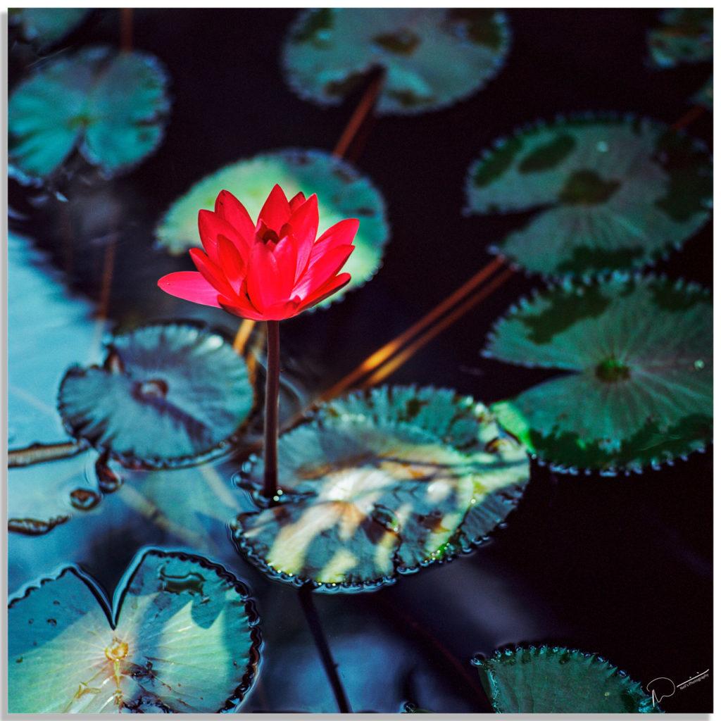 Flower-1024x1024.jpg