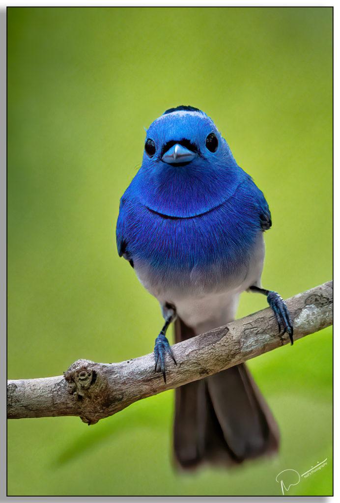 Neils-Photography-Bird-Hide-2020-762-692x1024.jpg