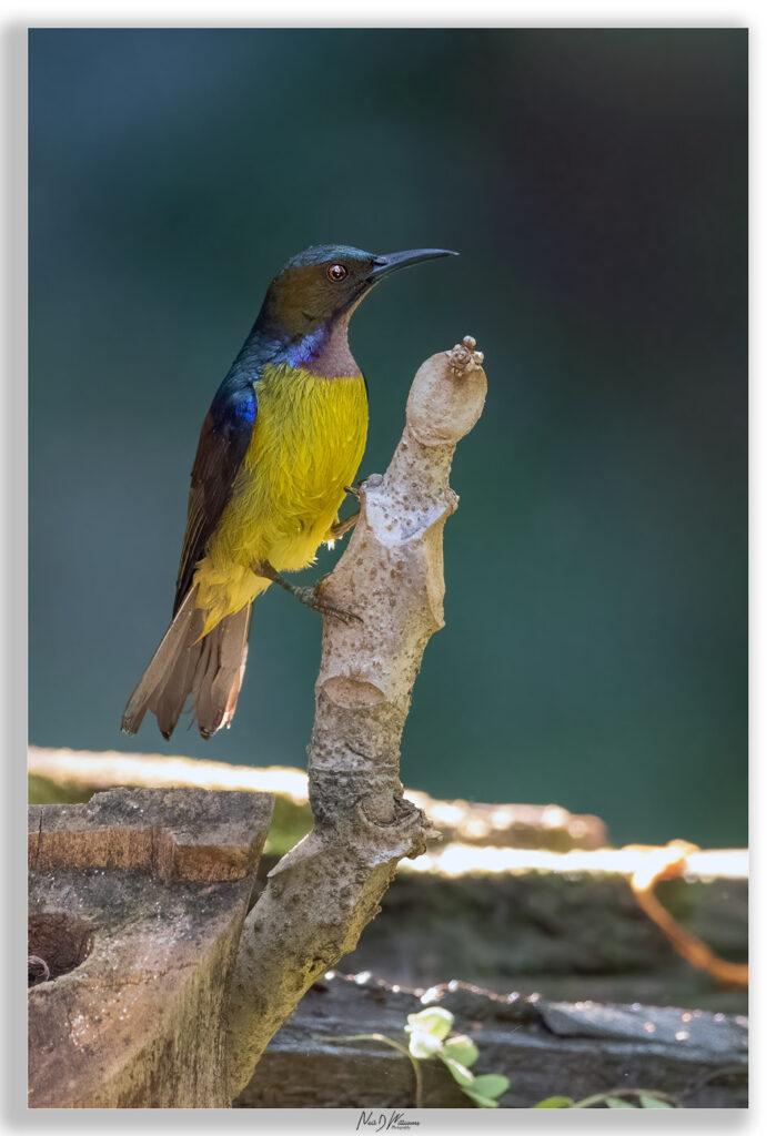 Neils-Photography-Sri-Phangnga-12012021_0321-699x1024.jpg